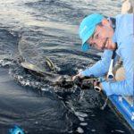 Releasing a Sailfish