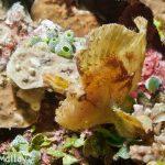 Leaf Fish Fiji