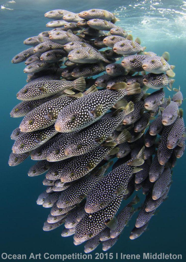 1st-ndslr-ocean-art-2015-irene-middleton